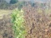 hedging2.jpg