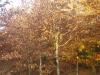pb080013.jpg