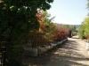 treessmall1.jpg