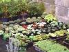 kinbark-nursery4_001.jpg