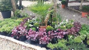plants+shrubs2