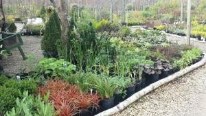 plants&shrubs3