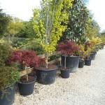 plants&shrubs4