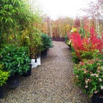 plants&shrubs6