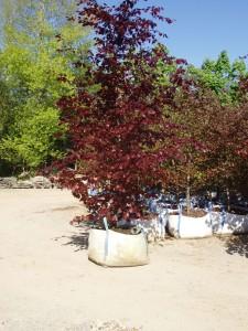 Mature-Tree3